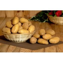 Pomme de terre anaïs