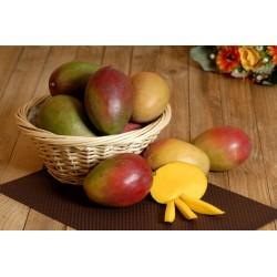 Mangue (pièce)