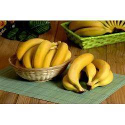 Bananes cavendish 18cm ( 500gr)