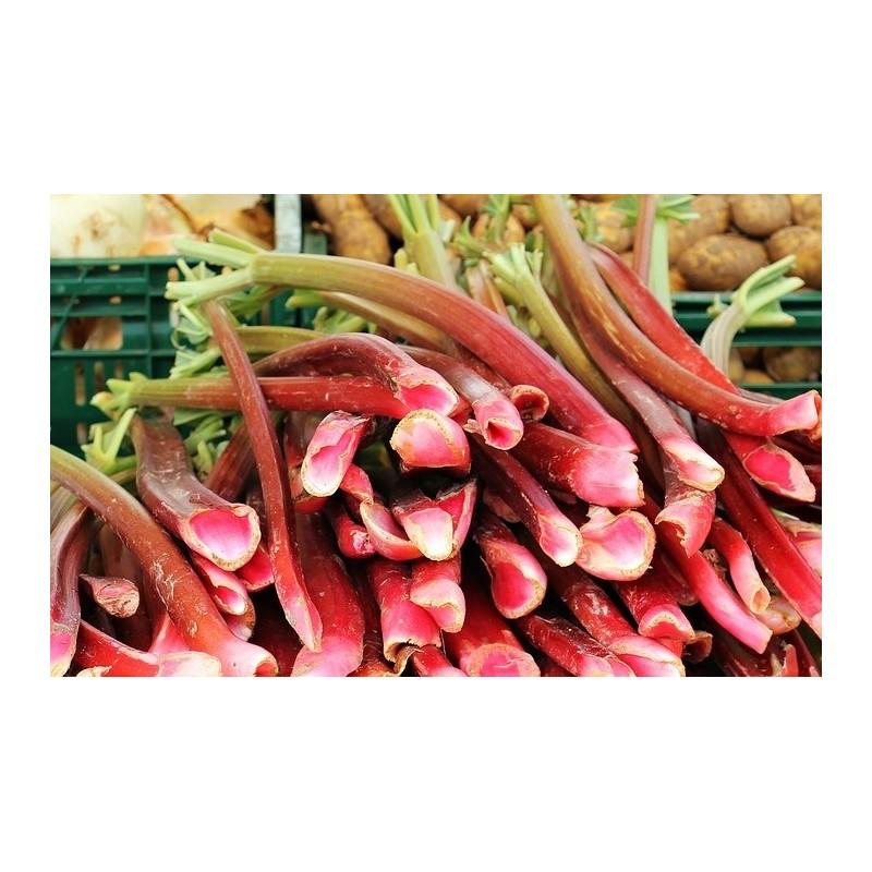 Rhubarbe (500 gr)