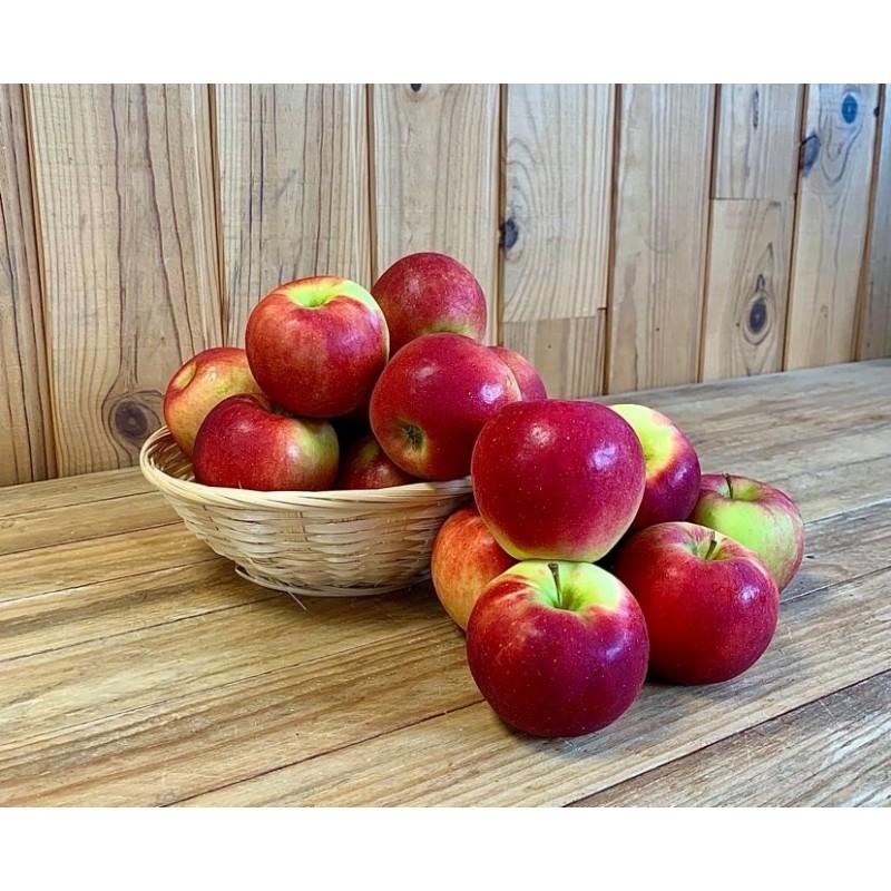 Pomme Pixie Crunch (500 grs)