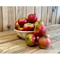Pomme Reine de Reinettes (500 grs)