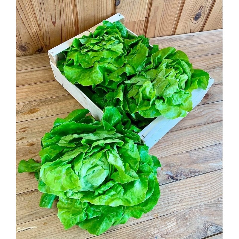 Salade Laitue (1 pièce)