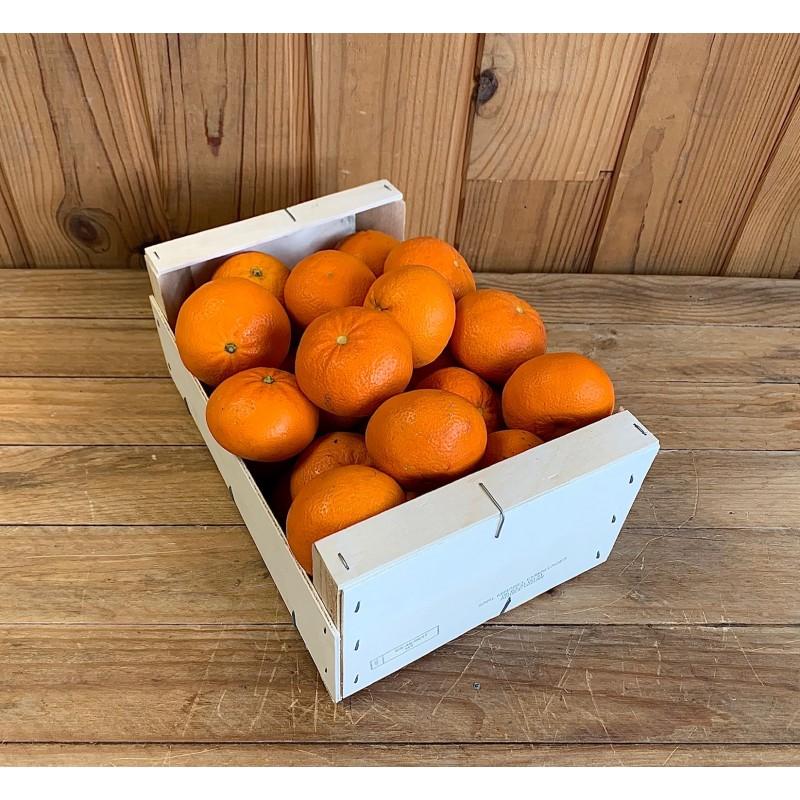Mandarine Ortanique (500 g)