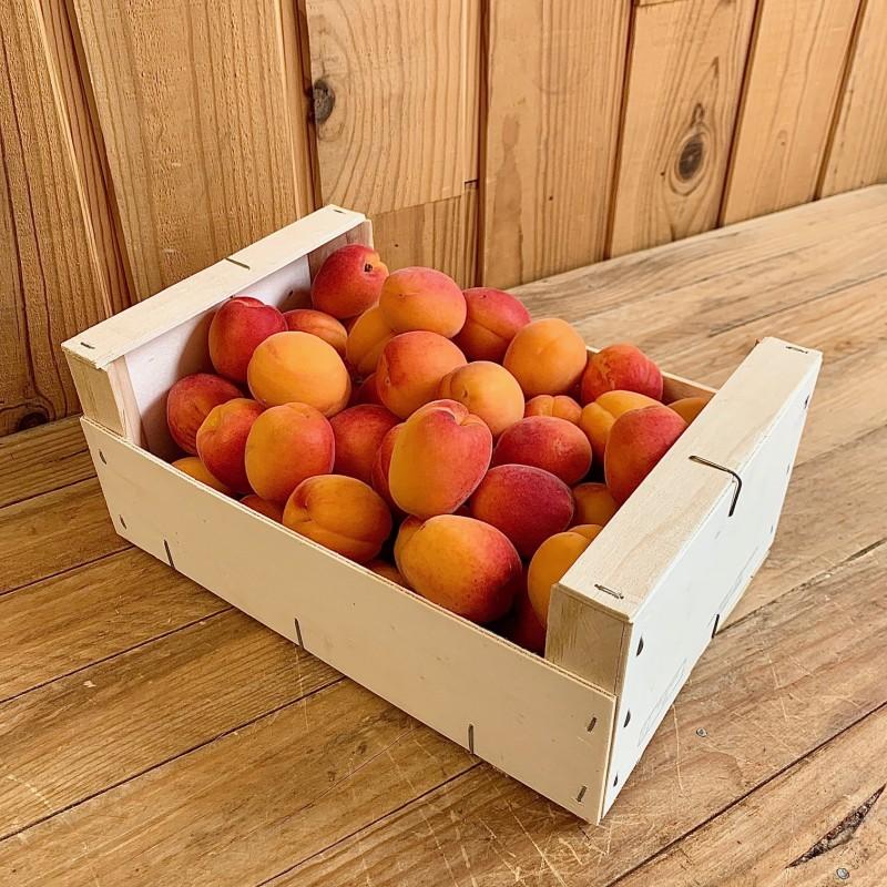 Abricots (500 g)