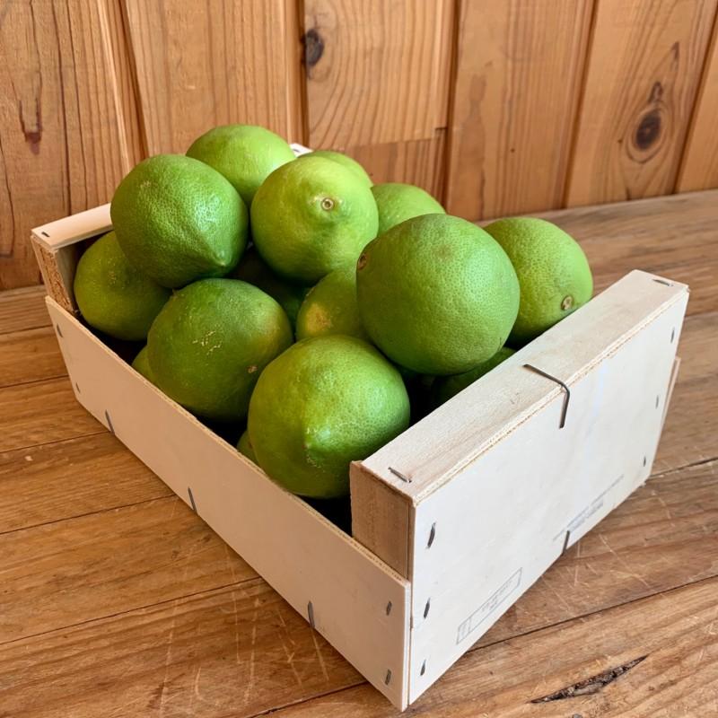 Citron Jaune (coloration...